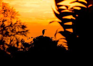 Heron silhouette in orange sunrise in Asia