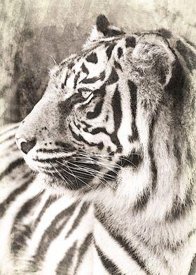 The Sumatran tiger (Panthera tigris sumatrae) is the s ...