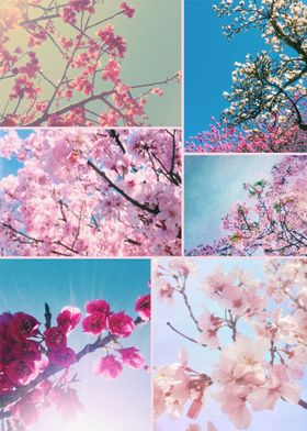Spring Floral Collage Pink White Cherry Plum Peach Magn ...