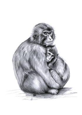 Snow monkey & baby G026 graphite drawing by Svetlana Le ...