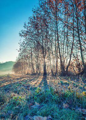 Winter morning, fog, sun and frozen grass