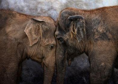 """I love You!""   -   two asian elephants heading tenderl ..."