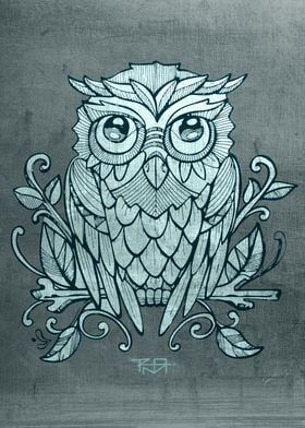 Hand drawn illustration or drawing of an owl