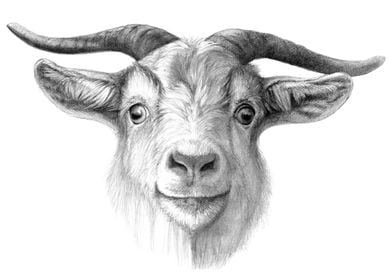 Curious Goat by schukina ref.G2015-124