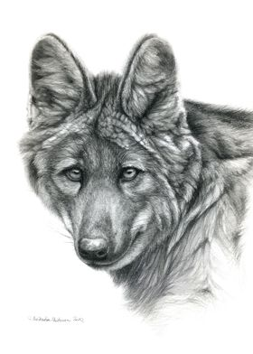 Maned wolf portrait G040 by Svetlana Ledneva-Schukina r ...