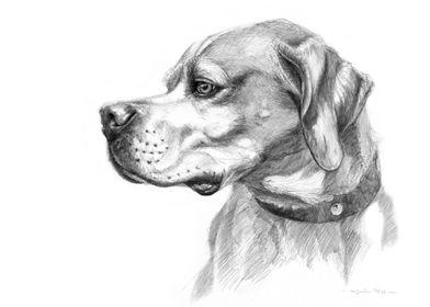 Pointer dog portrait G037 by Svetlana Ledneva-Schukina ...