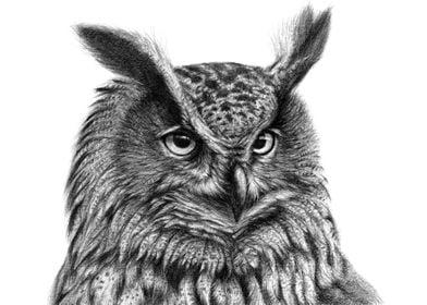 Eurasian eagle owl G045 by Svetlana Ledneva-Schukina r ...