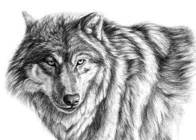 Wolf G031 by Svetlana Ledneva-Schukina ref.G2012-031
