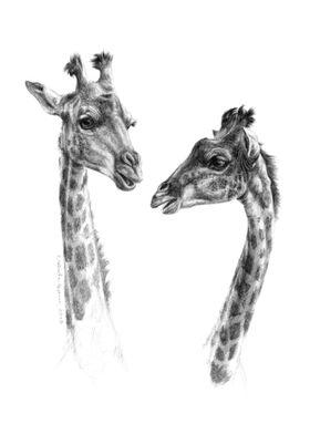 Giraffes G055 by Svetlana Ledneva-Schukina ref.G055