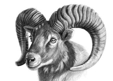 The Mouflon G125 by Svetlana Ledneva-Schukina ref.2016- ...
