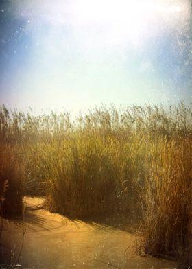 "Color photograph ""Little swamp"" taken in Delta del Llob ..."
