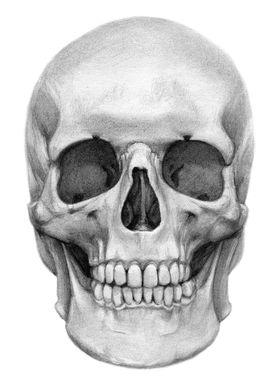 Human Skull by Svetlana Ledneva-Schukina ref. G2016-127 ...