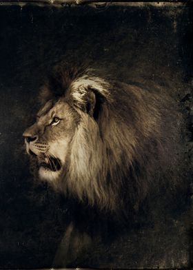 Portrait of a male lion - textured photograph