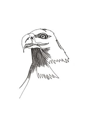 Bald Eagle, with one line. Line begins in the eye and e ...
