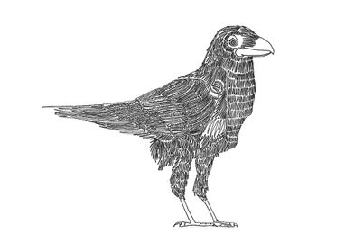 Crow with One Line. Line begins in the eye and ends in  ...