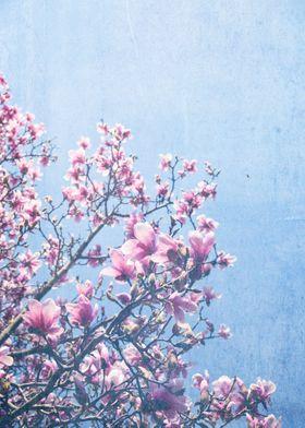 She Bloomed Everywhere She Went
