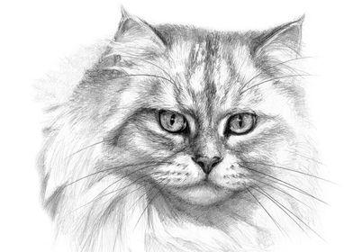 S-Schukina (s-schukina) Expressive glance cat G132 by S ...