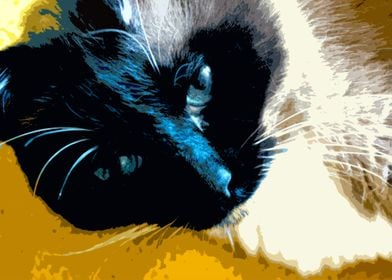 Igby, The Cat