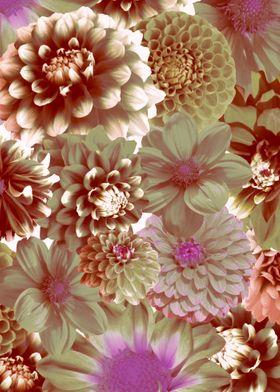 digital art flowers