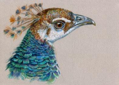 Peacock portrait CC006 by Svetlana Ledneva-Schukina col ...
