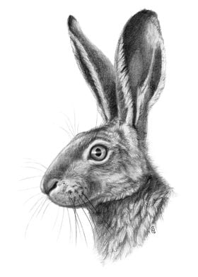 Hare profile G138,graphite drawing by Svetlana Ledneva- ...