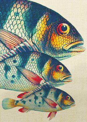 Fish Classic Designs 3