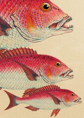Fish Classic Designs 7