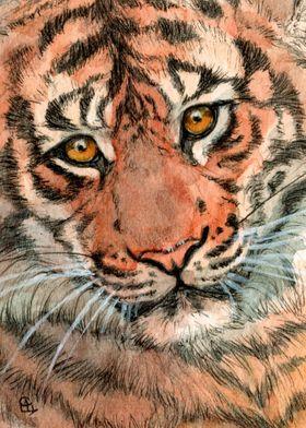 Tiger portrait 884 by Svetlana Ledneva-Schukina