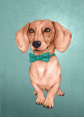 Dachshund, The Wiener Dog