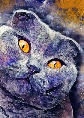 Cat Sheba