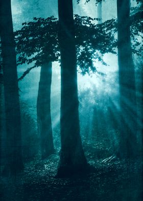 repetitions mystical forest scenery a sunrise