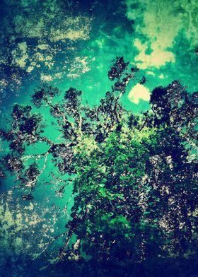 An Inner Forest