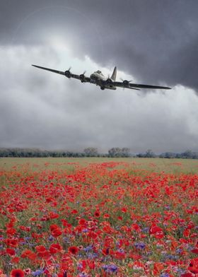A single B17 Bomber over a field of flowering Poppies.  ...