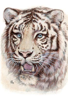 White Tiger portrait 909 by Svetlana Ledneva-Schukina