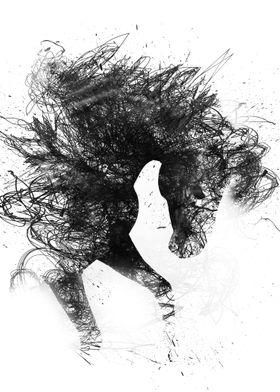 Diablo the wild horse