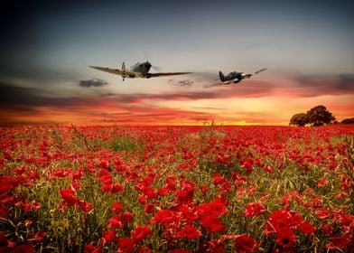 RAF Spitfire and Hurricane fly over a flowering field o ...