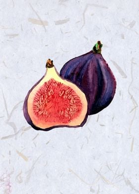 Figs in watercolor.