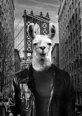 NY Tourist