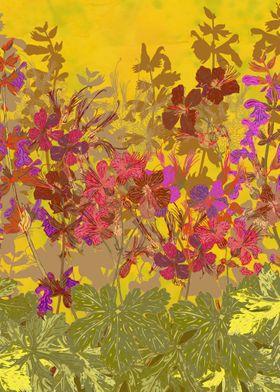 A Day in the Sun (Geraniums). Pretty wild geranium (cra ...