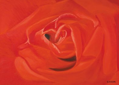 A rose for you.A beautiful red rose.