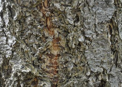 The bark of a tree.