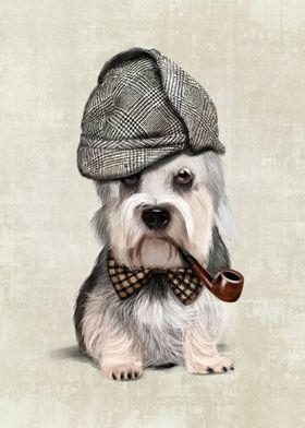 Portrait of elegant Dandie Dinmont Terrier, a small Sco ...