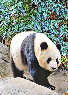 Panda bear in San Diego. If you love pandas, you will l ...