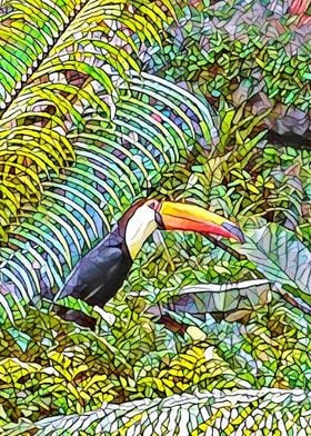 Toucan at the San Diego Zoo.