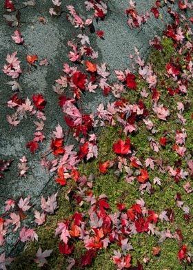 Fallen Leaves | Photography, Nikon D750, 2016