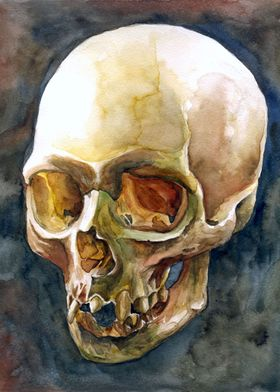 skull watercolour painting