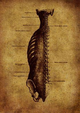 Anatomic19