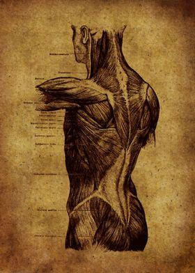 Anatomic22