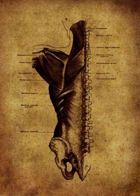 Anatomic21