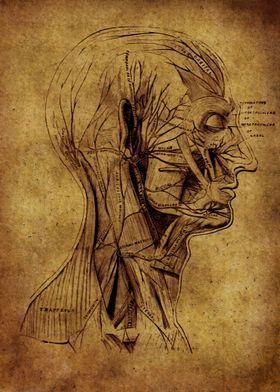 Anatomic23